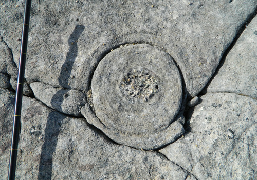 Photo 2012-162 : Water escape cylinders in the Cambrian sandstone. A. Cross-section of cylindrical column with coarse gravel at its core (arrow).