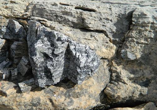 Photo 2012-167 : Columnar branching stromatolites, Wynniatt Formation