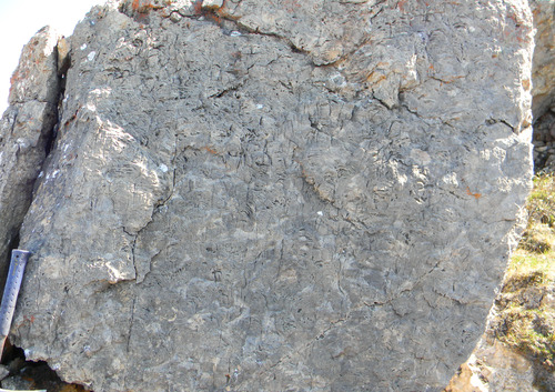 Photo 2012-170 : Typical features of the Wynniatt Formation in the study area. Columnar branching stromatolites