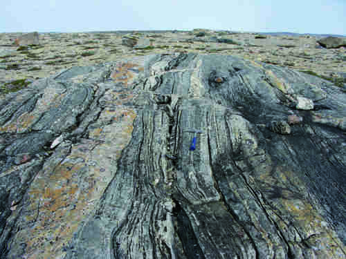 Photo 2013-275 : typical migmatitic orthogneiss forming potentially oldest plutonic component, intruded by younger Archean granite dykes and veins
