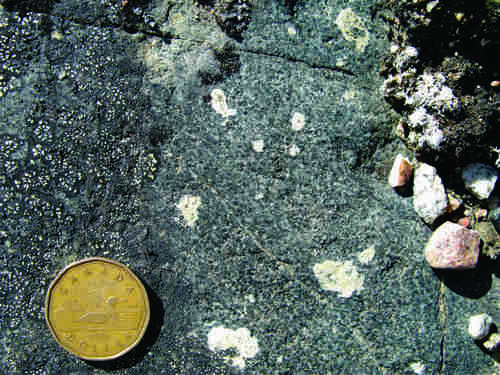 Photo 2013-276 : Altered feldspar phenocrysts in amphibolite dyke, possibly part of the MacQuoid Proterozoic dike swarm